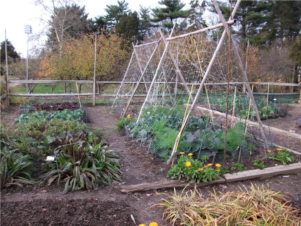 vegetable-garden-133441298497619Nzh